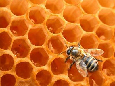 La cosecha de miel 2012/2013