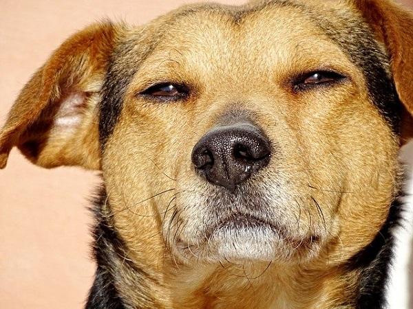 Censo canino sanducero revela que hay más perros que personas