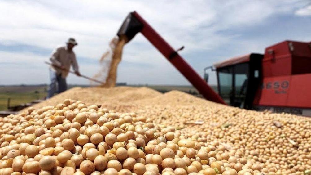 El trigo sigue subiendo