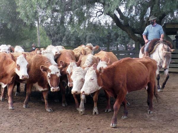 Juan C. Martínez Negocios Rurales dispersó con suma agilidad abultada oferta