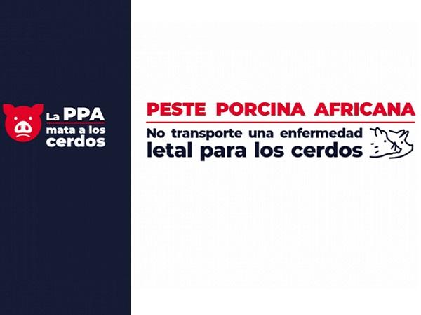 Peste porcina africana: Uruguay refuerza controles en puertos y aeropuertos