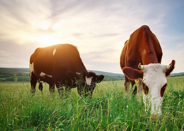 Hoy será la jornada sobre campo natural de INIA y el Plan Agropecuario