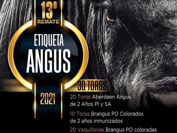 Hoy se realizará el 13° remata de Etiqueta Angus