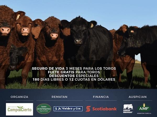 Hoy Valdez vende los toros y vientres de La Competencia