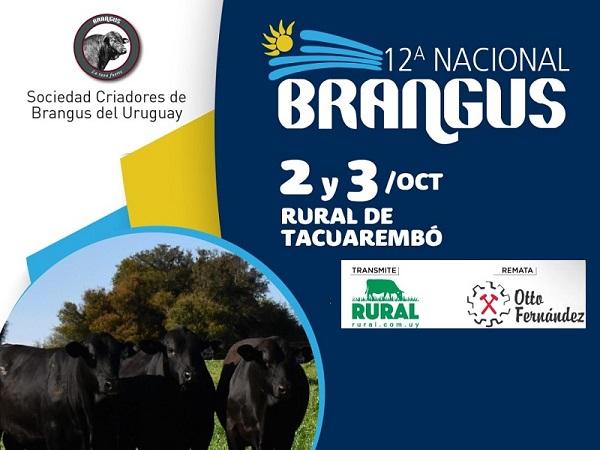 En octubre llega la Nacional Brangus