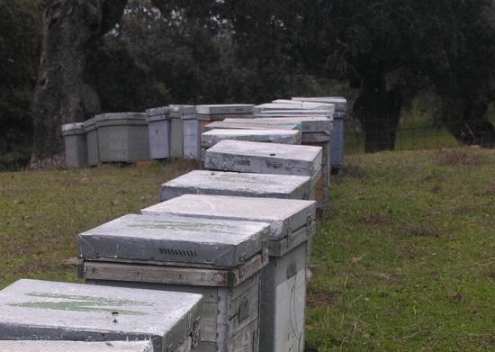 Día a día desaparecen apicultores así como desaparecen atletas