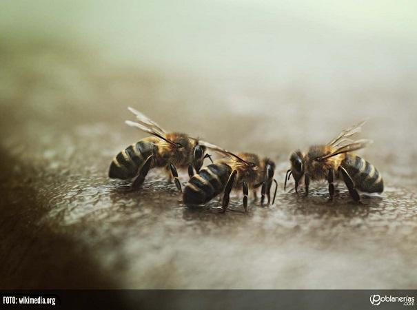 Sigue en baja el precio promedio de las exportaciones de miel