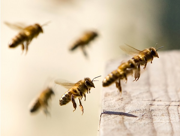 Todos deberíamos conocer las virtudes de los productos que nos dan las abejas