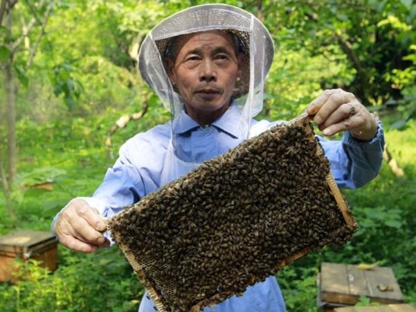 Buenos resultados de la auditoria china a la cadena apícola