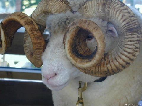 Vigencia e importancia de los baños ovinos