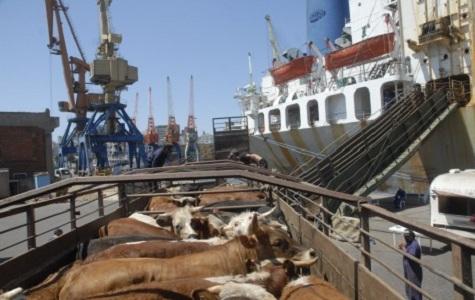 Cae exportación de ganado en pie en 2012 y se autorizó embarque ovino