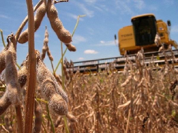 Estado de los rendimientos de cosechas hasta la fecha