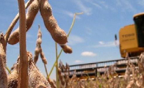 Soja, el producto que más exportó Uruguay