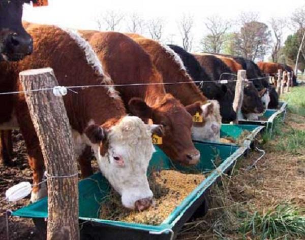 Importantes problemas parasitarios en vacunos, ovinos y equinos