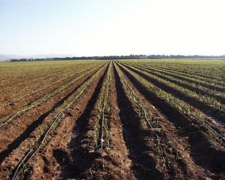 30 de abril vence plazo para planes de uso y manejo de suelos