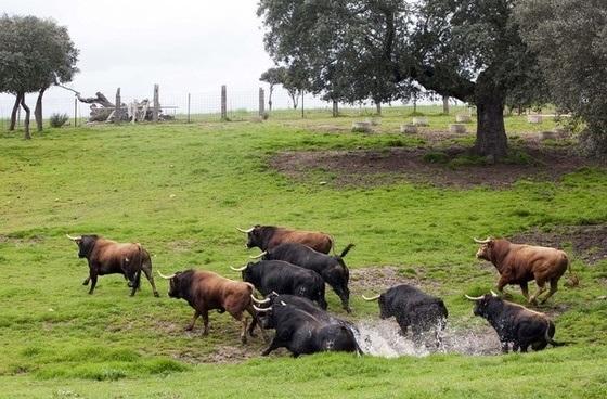 El agua mejoró estado de ganados y campos