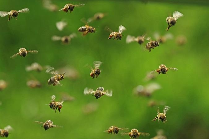 """Los jóvenes son un público """"interesante"""" para el consumo de miel"""