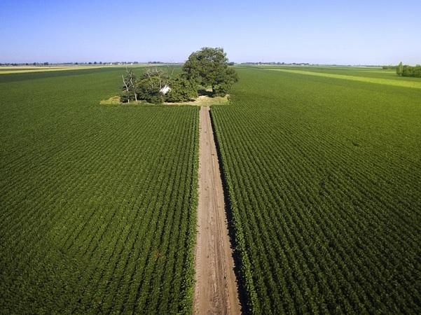 Brasil alcanzó nuevo récord en producción agrícola