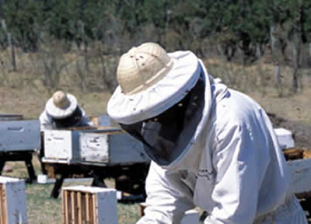 Curso básico de apicultura en Artigas