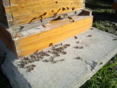 ¿Llegará el 11 de setiembre para los apicultores del sur uruguayo?