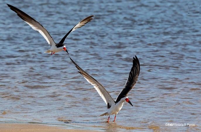 Casi un millón de personas se beneficiarán de un proyecto de Uruguay y Brasil en la cuenca de la Laguna Merín