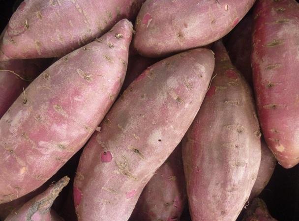 """""""Diferentes hortalizas que comemos en Uruguay tienen detrás el trabajo de investigadores de INIA"""""""