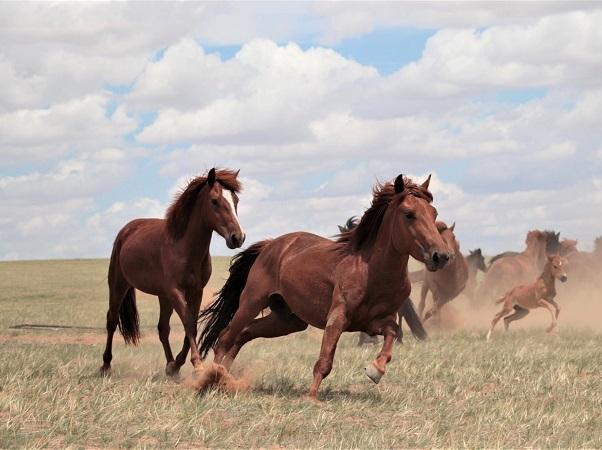 Tras los orígenes de los caballos modernos