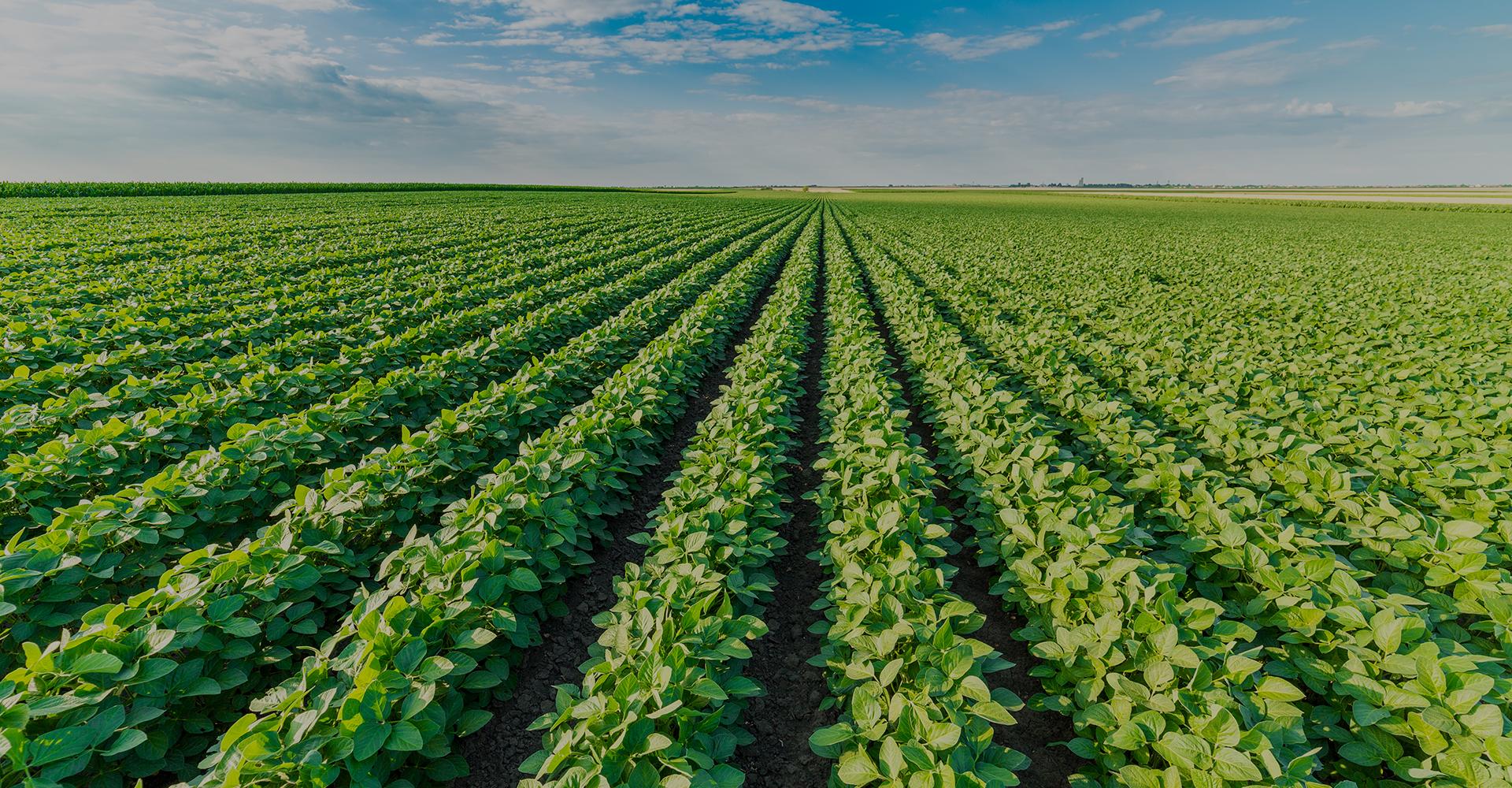 Altos costos quitan rentabilidad y competitividad a los cultivos de invierno