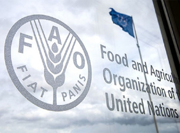 FAO: Los sistemas agroalimentarios de la región deberán cambiar para enfrentar la postpandemia