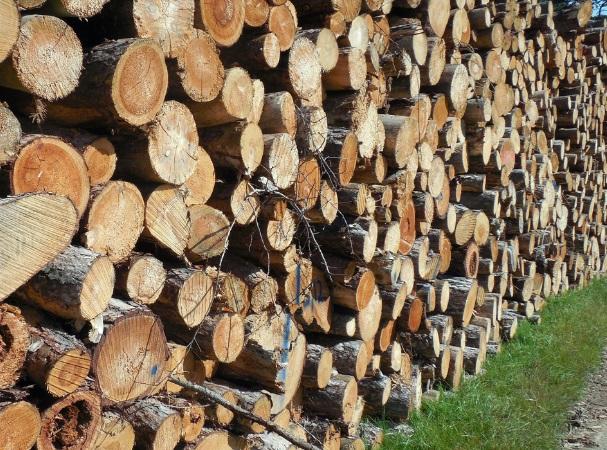 Probá ser un operador forestal en la Expo Prado 2021