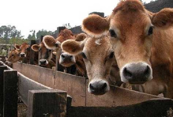 Mientras el presidente ofende a los ganaderos, persisten los copamientos