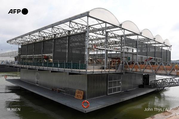 Predio flotante de vacas en Holanda para mitigar el cambio climático