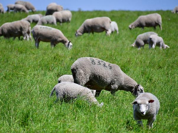 Crilu: 10 años de trabajo conjunto por el desarrollo, la diferenciación y el posicionamiento de las lanas ultrafinas uruguayas