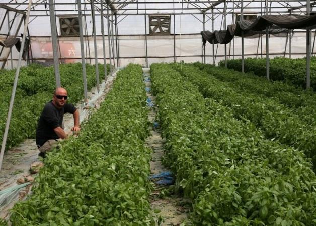 Israel: Inteligencia artificial para invernaderos aumenta la capacidad de cultivar localmente
