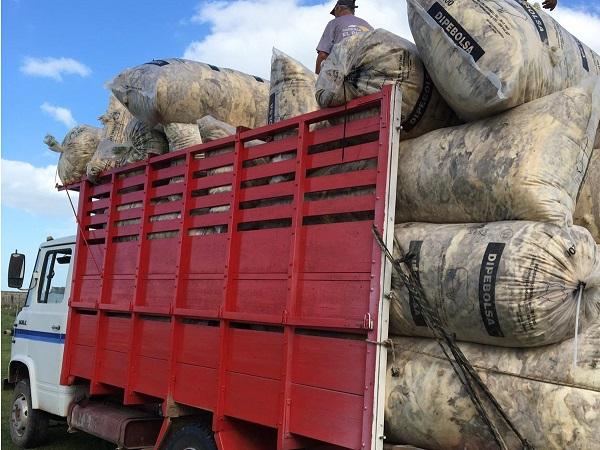 Exportaciones de lanas están atrasadas hasta 3 zafras