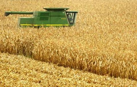 Brasil supera a Argentina y es segundo exportador de maíz
