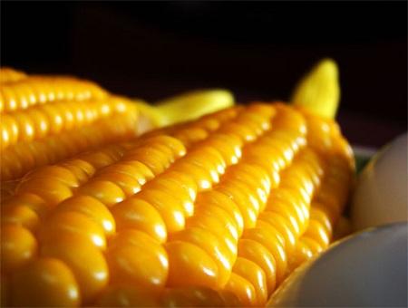 Polonia prohíbe cultivos transgénicos de Basf y Monsanto