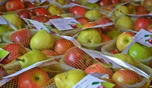 Promueven consumo de manzanas y peras en beneficio de la salud