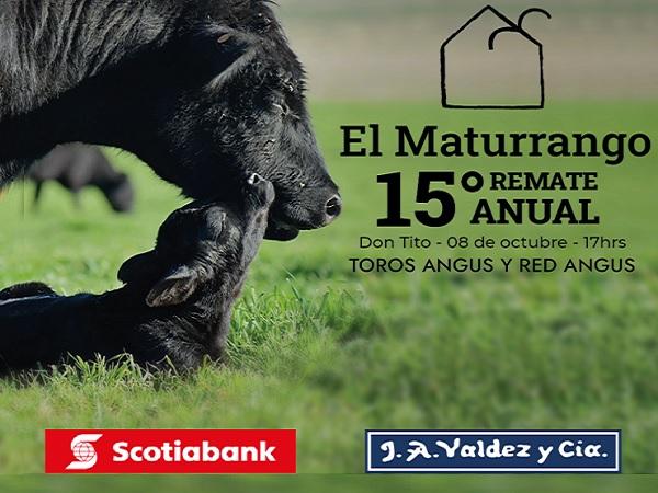 Hoy Valdez vende los Angus de El Maturrango