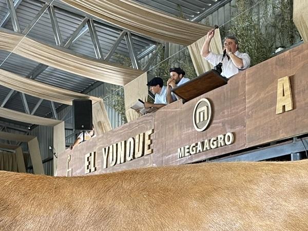 Los toros del Yunque se vendieron a US$ 28.800 máximo