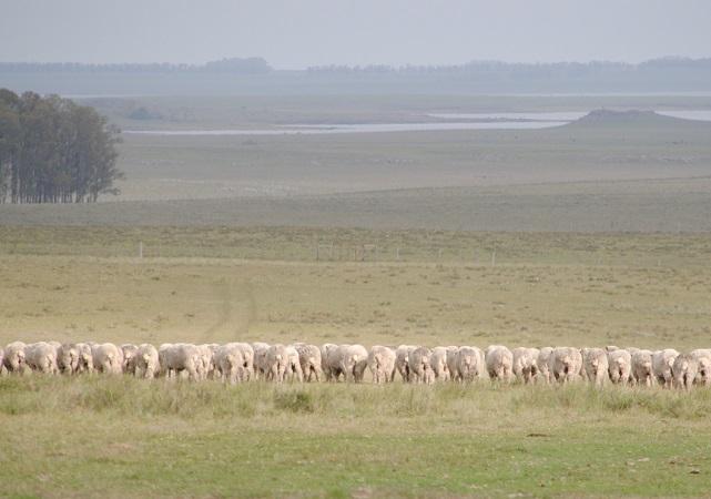 Una multifacética Expo Chiflero celebró el Día de la Mujer Rural y subastó destacados ovinos