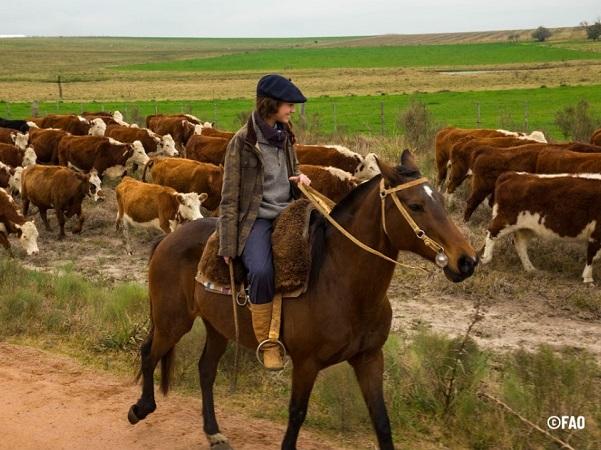 Ganadería y Clima aumentó un 50% el ingreso neto en la mayoría de los predios, pese a la sequía en Uruguay