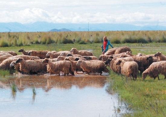 Cultivos y ganados afectados por las lluvias