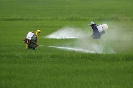 Pesticida de amplia difusión estaría ligado al Parkinson