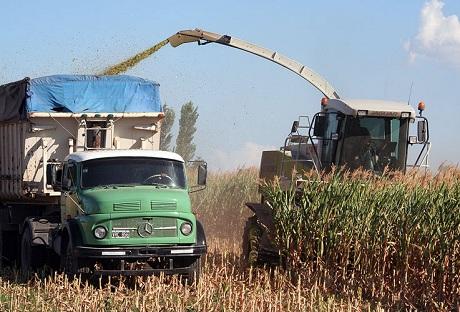 Buenos rindes de maíces para silos en el litoral norte