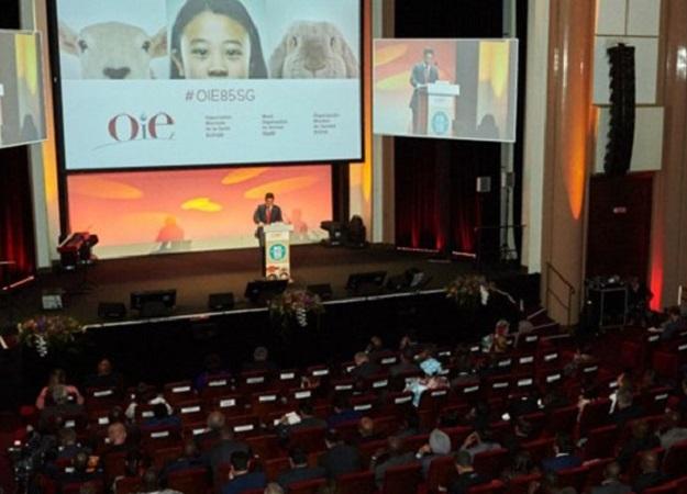 Uruguay participa de debate sobre sanidad y bienestar de la OIE