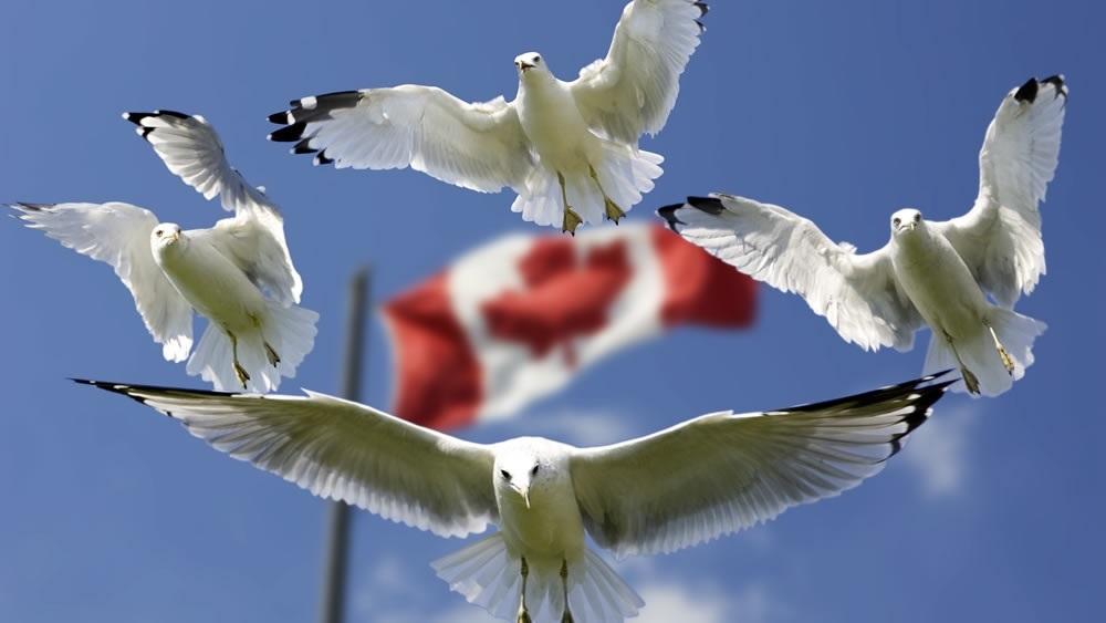 El domingo será el Día de Uruguay en Canadá