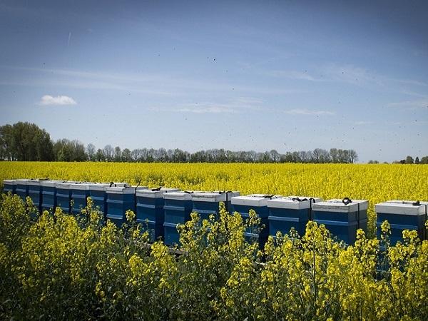 Para el MGAP la apicultura empieza a ser más importante