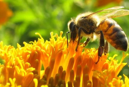 Hay que salvar las abejas