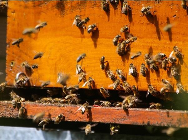 Uruguay quedó relegado en las exportaciones de miel a Estados Unidos